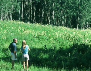 New Listing - The Reserve on The East River Crested Butte